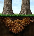 Working Away Relationships can mean forming roots together based on agreed partnership as illustrated by two tree roots growing together.