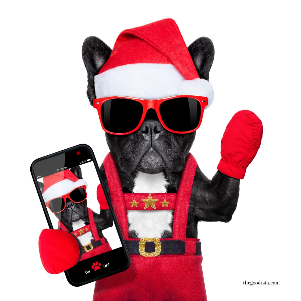 Working on Christmas and more posts on thegoodista.com illustrated by dog as Santa in sunglasses